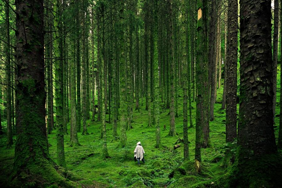 Alene i skoven